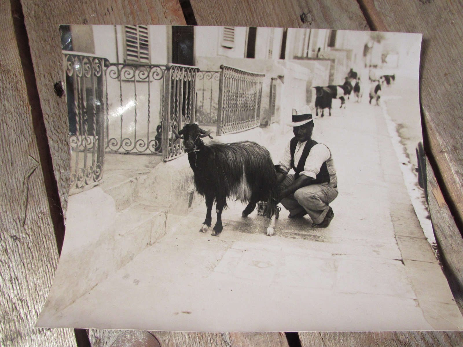 Great B/W photo of a local man in Malta milking a goat in the street